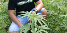 pilipinas-rocks-medical marijuana thailand