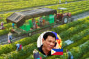 pilipinas-rocks-organic rice farmers to export to us